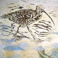 art print of curlew