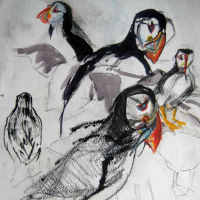 drawings of puffins