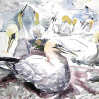 painting of gannets nesting